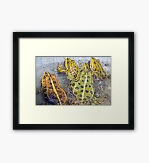 Frogs Framed Print