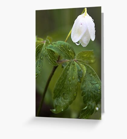 Wildflower -  After The Spring Rain Greeting Card
