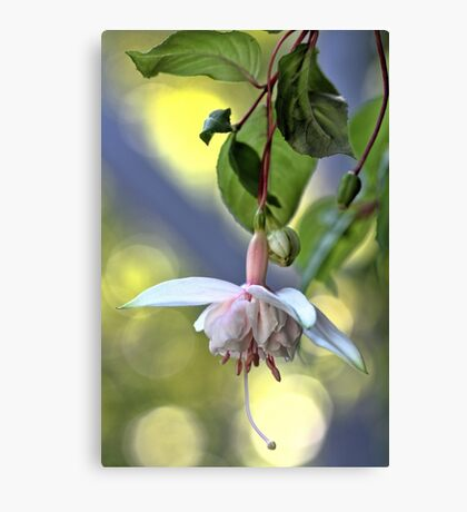 Ivory Fuschia Canvas Print