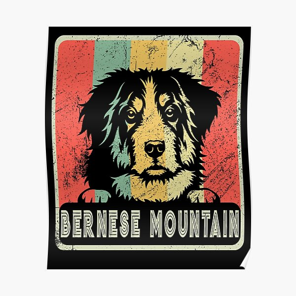 Vintage Bernese Mountain Dog Gift For Dog Lover Poster