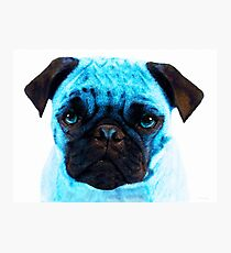 Blue - Pug Pop Art By Sharon Cummings Photographic Print