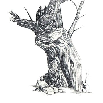 Old Tree by BrandyHouse