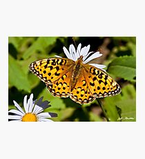 Pearl Border Fritillary Butterfly on an Aster Bloom Photographic Print