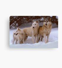 Winter Wolves Canvas Print