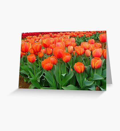 Orange Parade Greeting Card