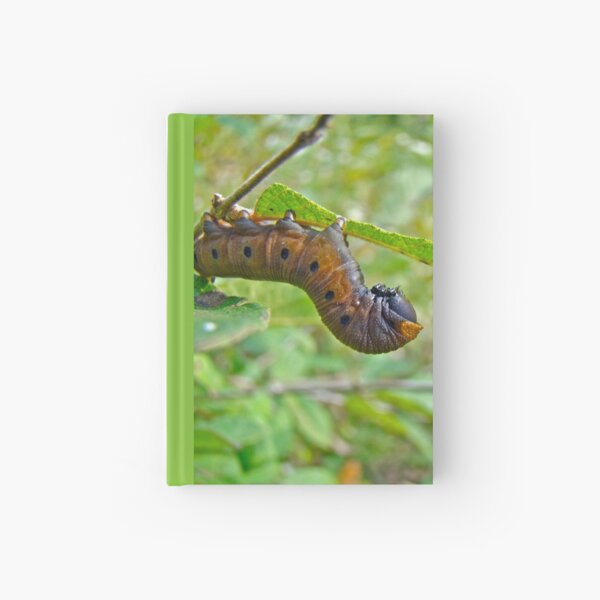 Snowberry Clearwing Hawk Moth Caterpillar - Hemaris diffinis Hardcover Journal