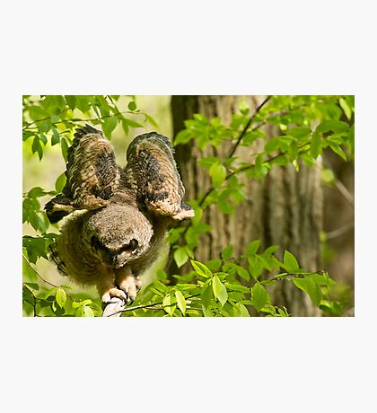 Great Horned Owlet Photographic Print