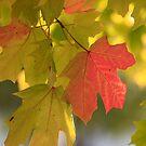 Fall Beauty by Lisawv
