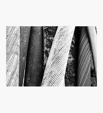 Tethered Photographic Print