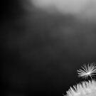 If You Had One Wish by Robert McMahan