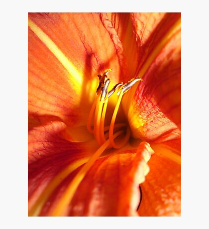 Day Lily Photographic Print