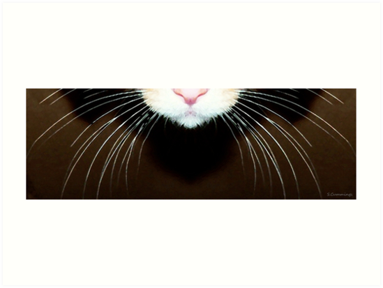Cat Art - Super Whiskers by Sharon Cummings