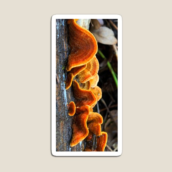 Chiluly Forest Fungus Magnet