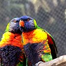 Love Birds by Megan Martin