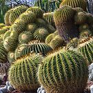 Cactus Garden 2 - The Huntington by David Galson