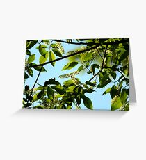Chokeberry Tree Blossoms Greeting Card