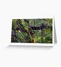 Mossy Tree in the Forest Greeting Card