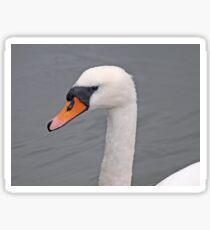 Head of a White Swan Sticker