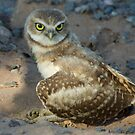 Look into My Eyes by Sue  Cullumber