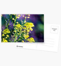 Yellow Rocket Flower Blossoms Postcards