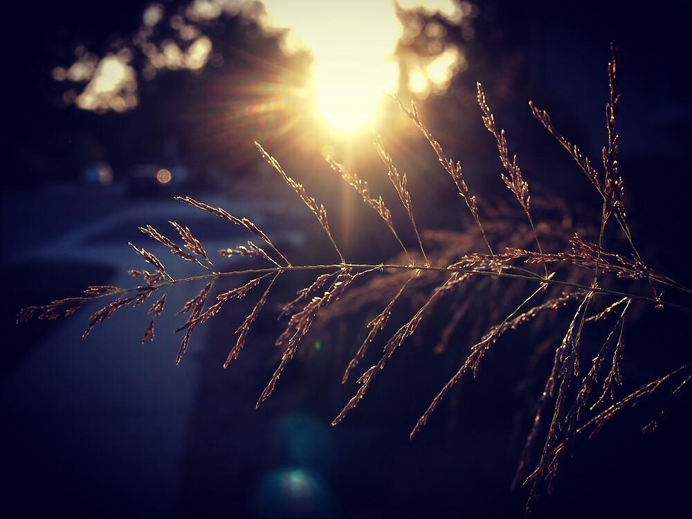 Sunset lights the grass from A Gardener's Notebook by Douglas E.  Welch