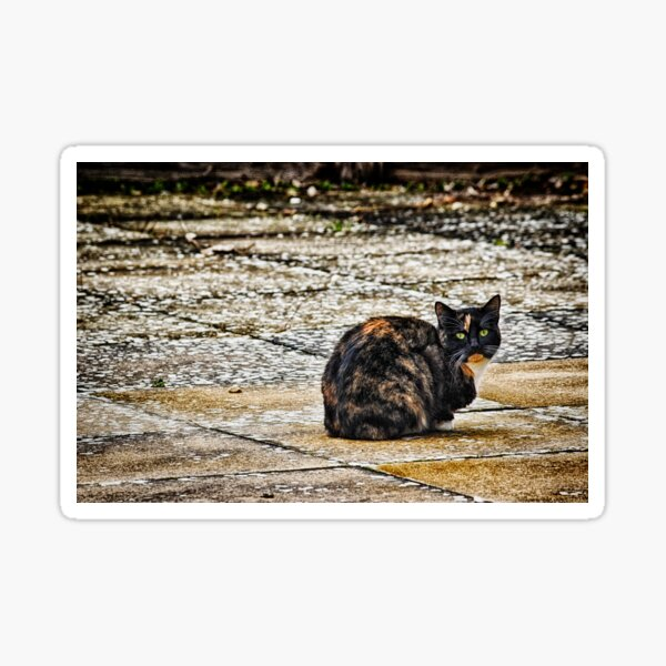Tortoiseshell Cat  Sticker