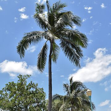 Florida Palm by samcaiazzo