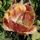 Fancy Tulips. by Janone