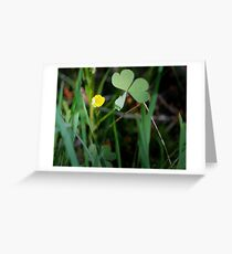 Lone Buttercup and Clover Leaf Greeting Card