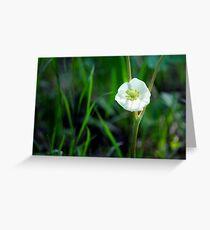 Mayapple Blossom Greeting Card