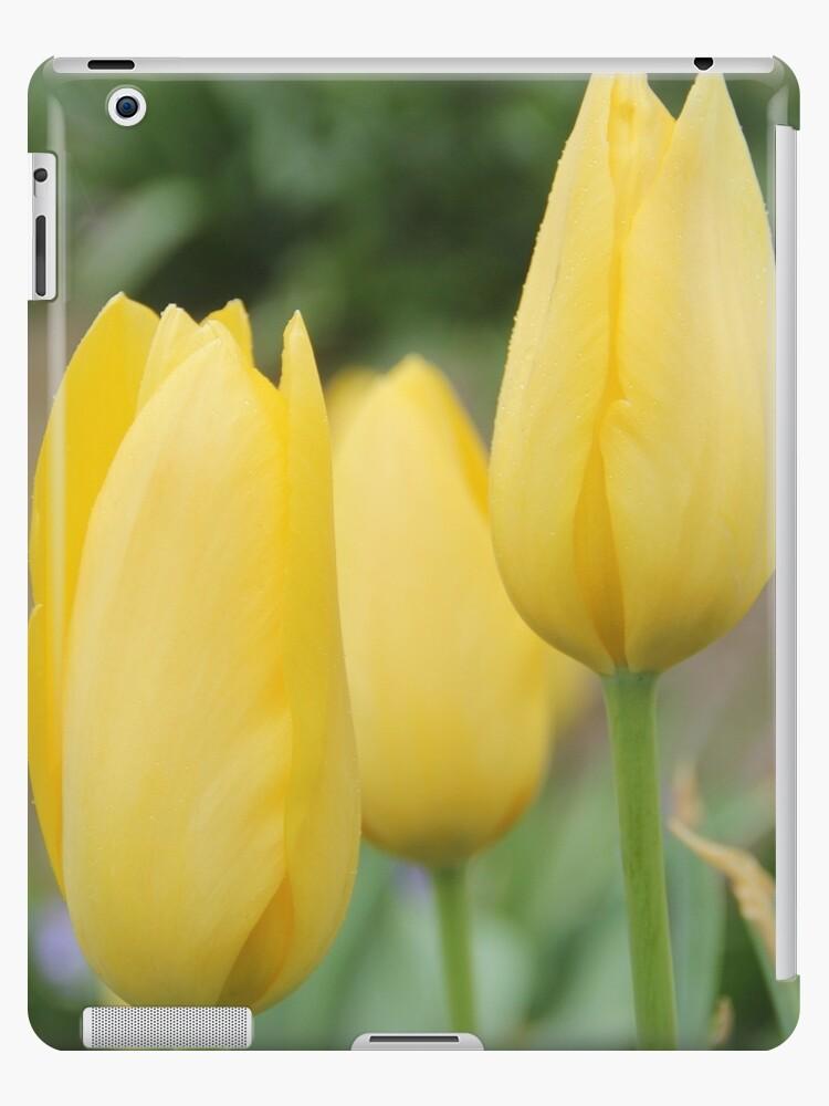 Yellow Buds of Tulips by ©Josephine Caruana