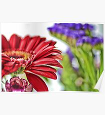 Large Bright Red Flowers  Poster