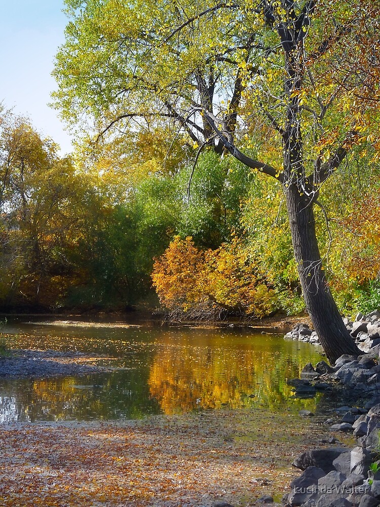 Fall Reflections by Lucinda Walter