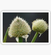 Onion Flowers Sticker