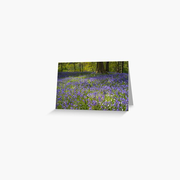 Bluebell Wood Greeting Card