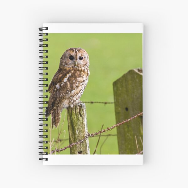 Tawny Owl on fencepost Spiral Notebook