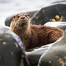 Arran Otter by Stephen Miller