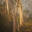Smoke Gets In My Eyes #4 - The HDR Experience by Philip Johnson