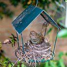 Bird Nest  by Adam Calaitzis