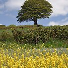 TREE ON A GOLDEN HILL by Michael Carter