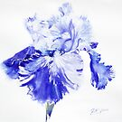 Rex's Blue Iris by Ruth S Harris