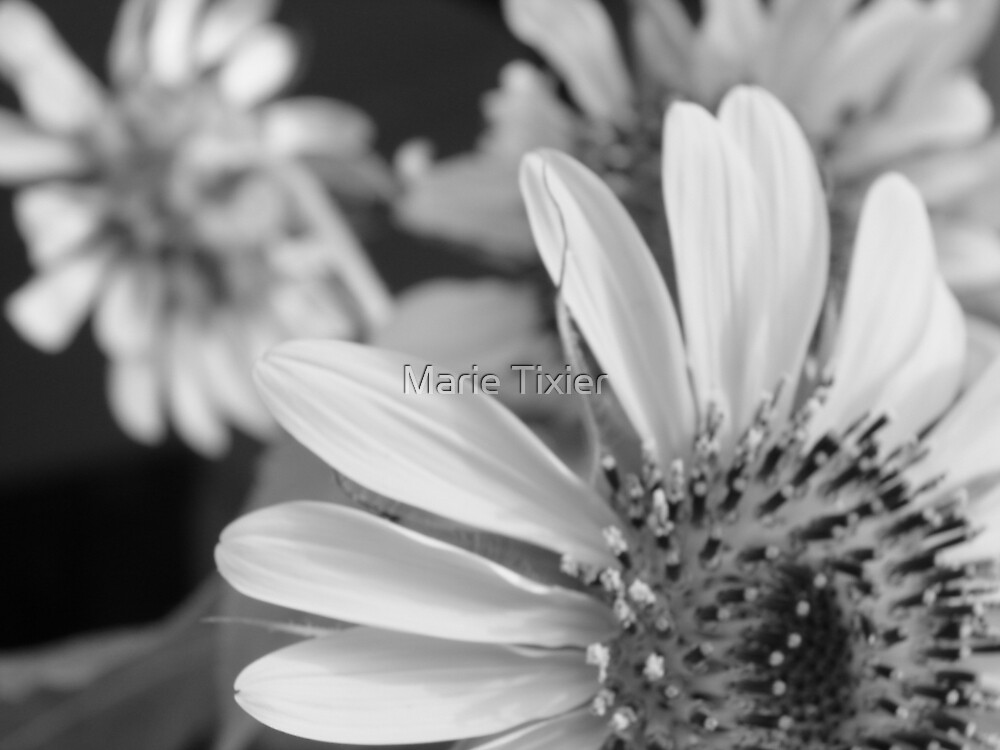 my best sunflower by Marie Tixier