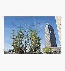 Growing City Photographic Print