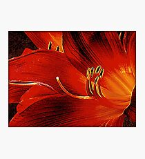Blood-red Flowers Photographic Print