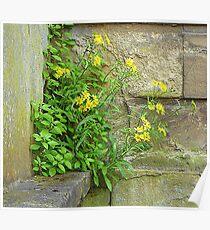 Yellow Daisies On Stone Poster