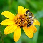 Honey Bee Good by Bill Morgenstern
