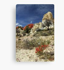 Red Flowers At Red Rock Canyon Canvas Print