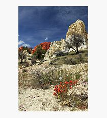 Red Flowers At Red Rock Canyon Photographic Print
