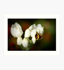 Teeny Weeny Butterfly Art Print