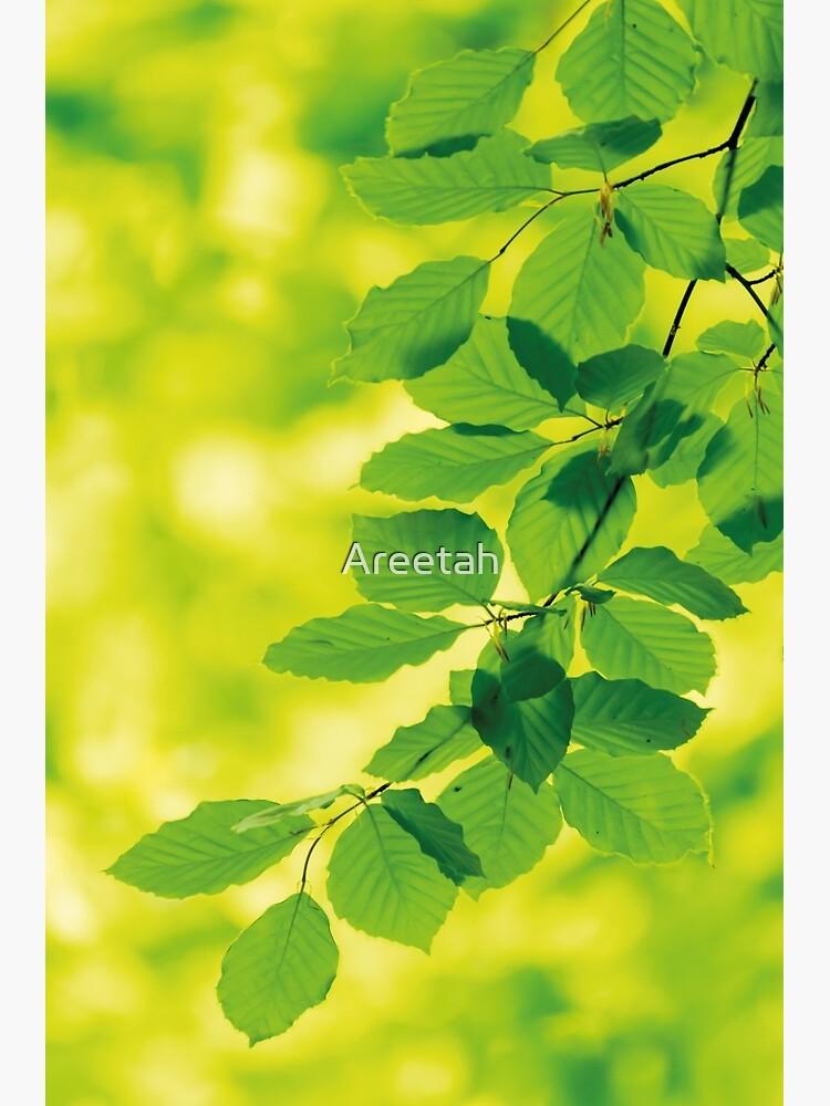 Buchenblätter im Frühling von Areetah